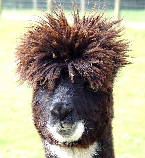 Photos drôles où touchante de toute animaux autres que les ânes ! Image-humour-animaux12