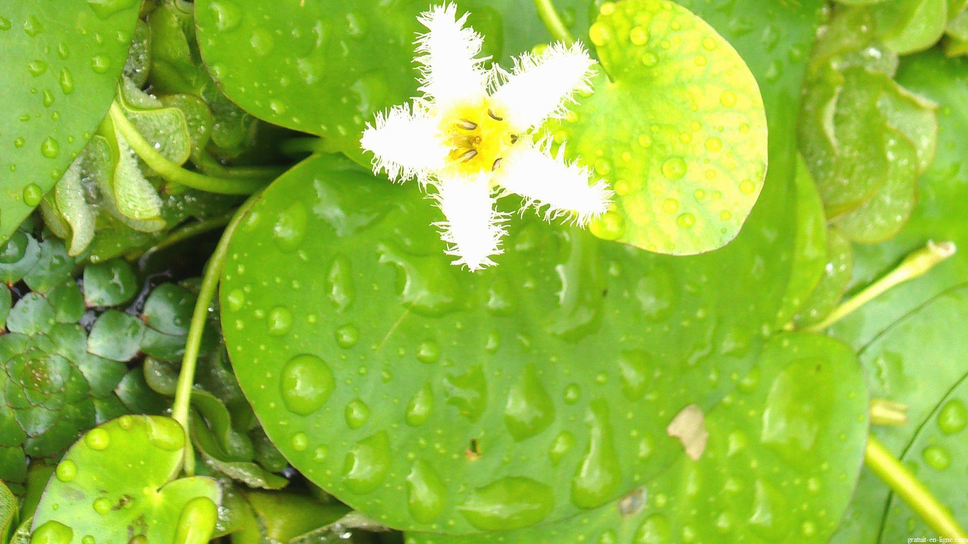 Wallpaper fleurs gratuit for Achat fleurs et plantes en ligne