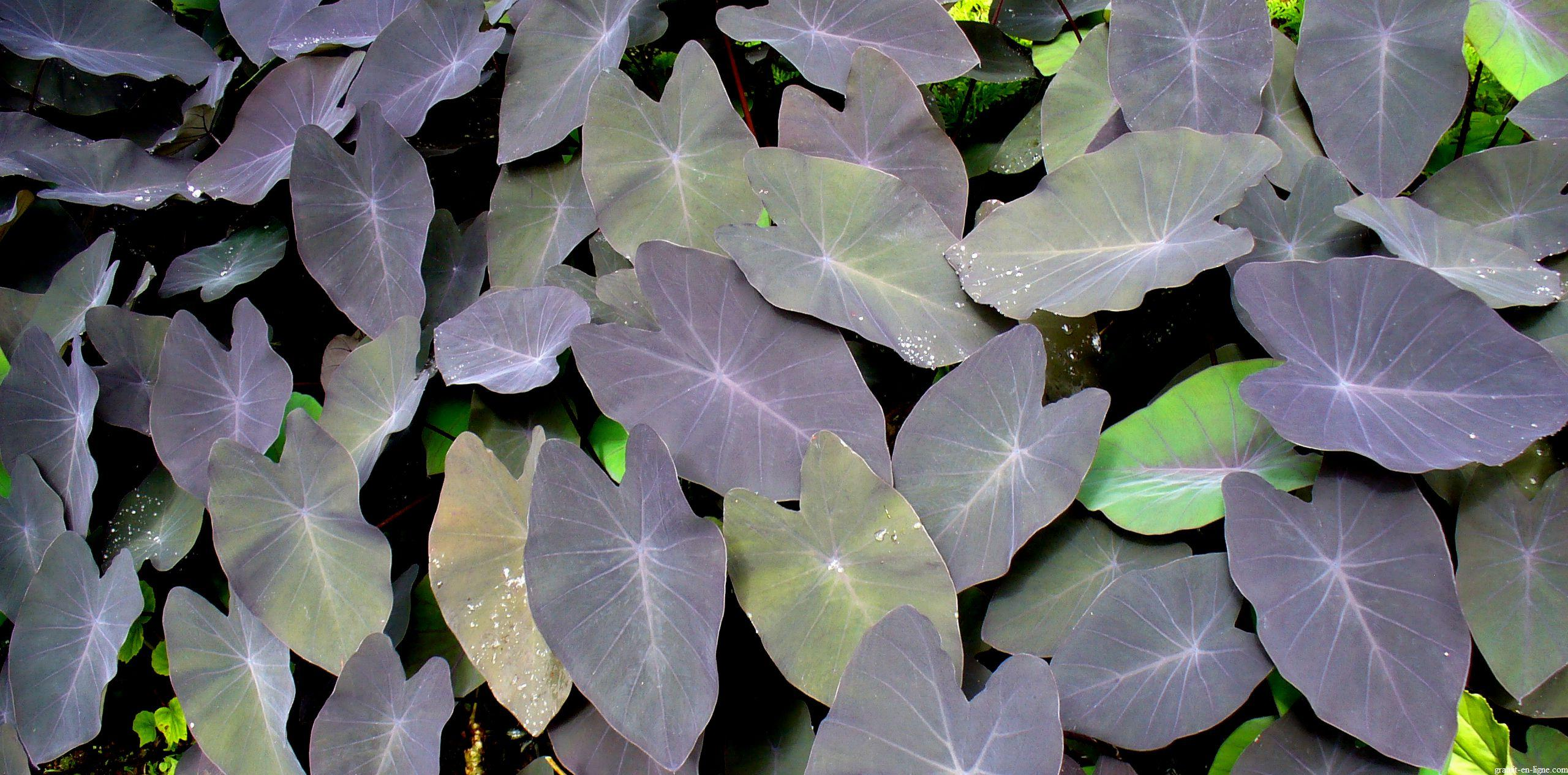 Image wallpaper fleur et plante gratuit hd en ligne for Plante 5 feuilles