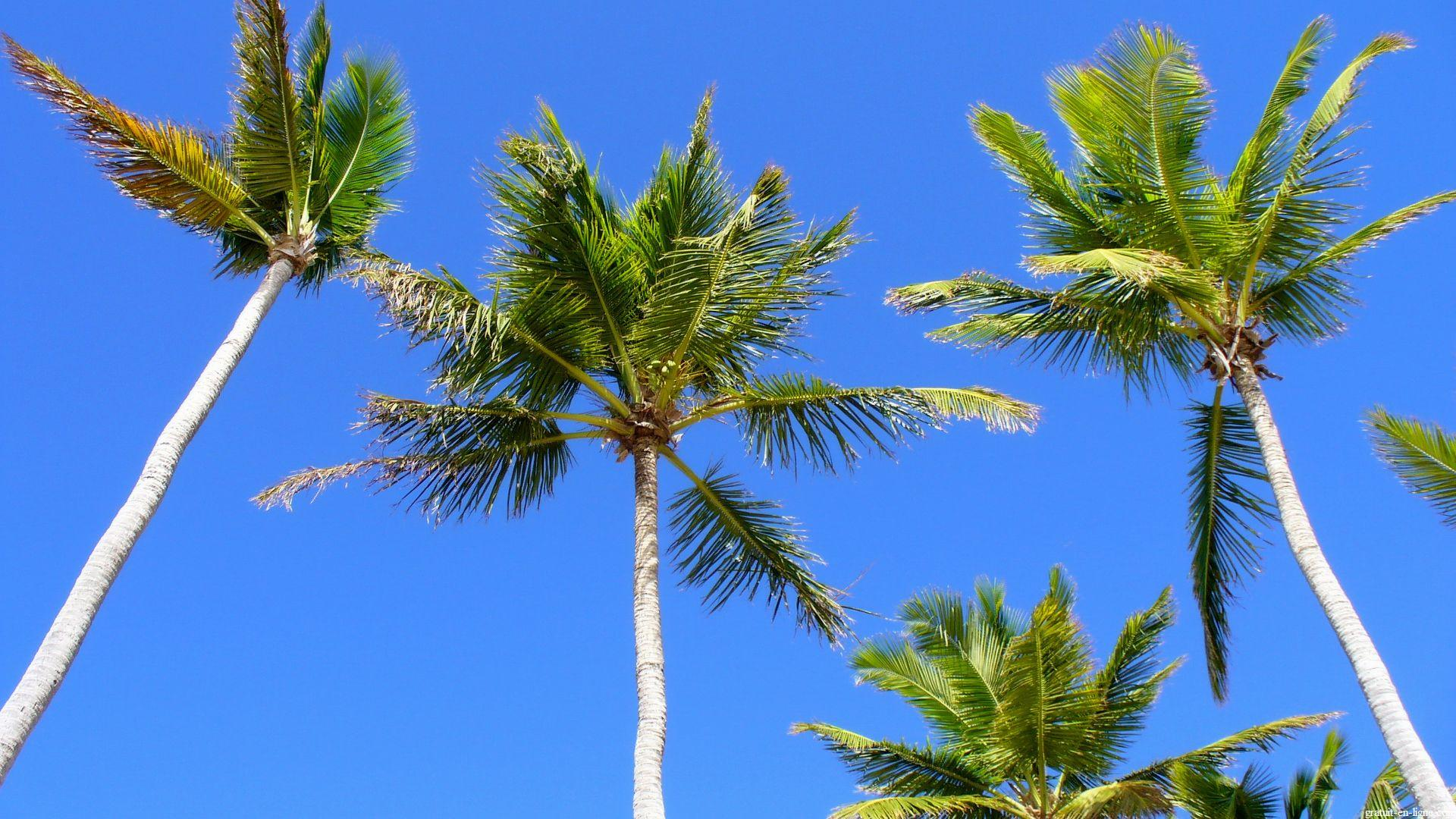 Image wallpaper fleur et plante gratuit hd en ligne for Plante palmier