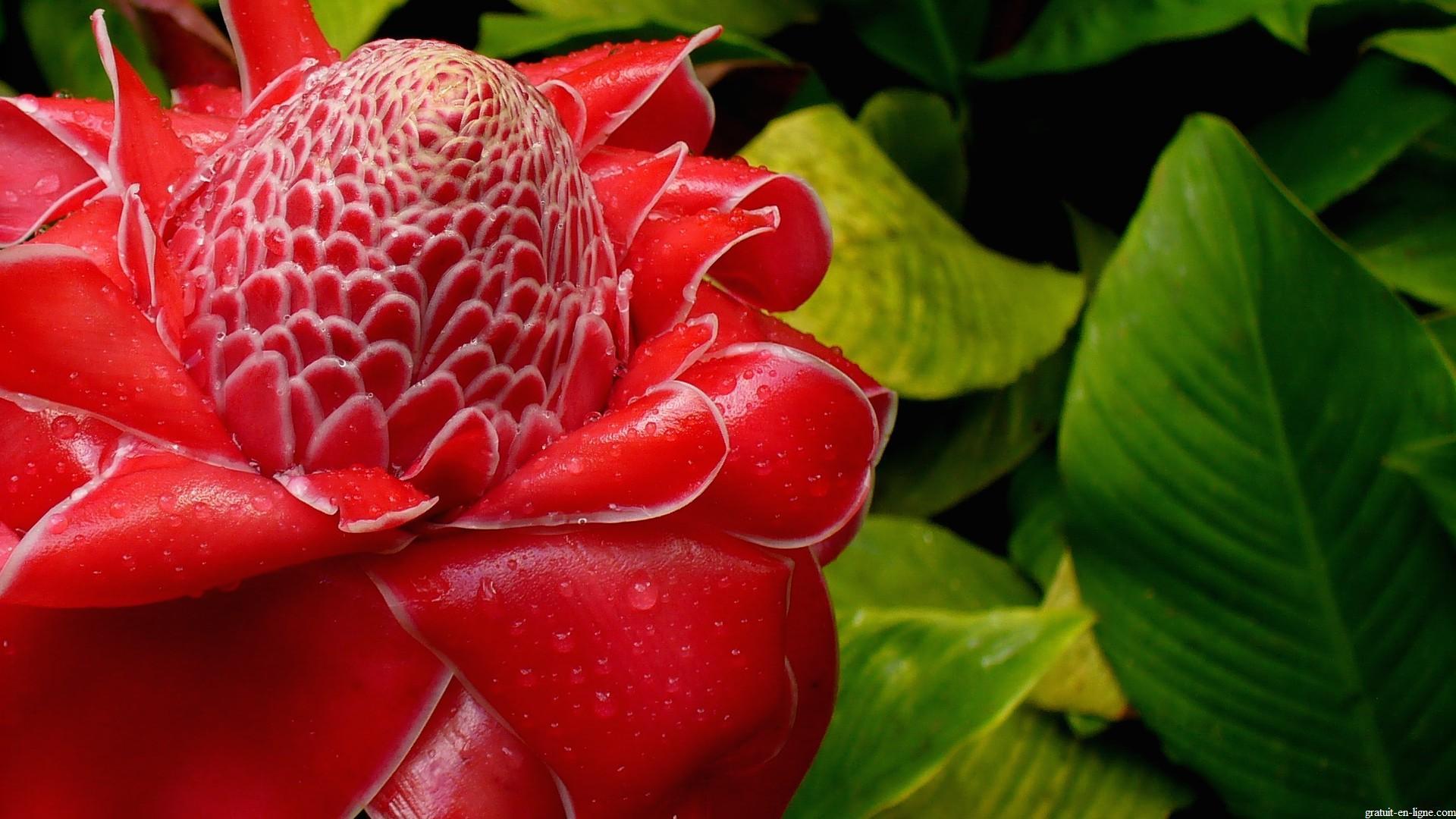 image,wallpaper,fleur,plante,rose,porcelaine