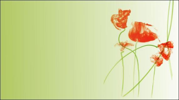 Image wallpaper fleur et plante gratuit hd en ligne for Plante 21 en ligne